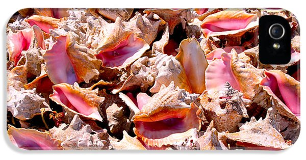 Conch iPhone 5 Cases - Bahama Conch iPhone 5 Case by Carey Chen