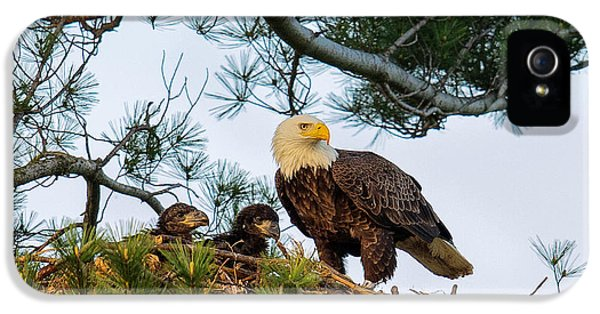 Juvenile iPhone 5 Cases - Bald Eagle with Eaglets  iPhone 5 Case by Everet Regal
