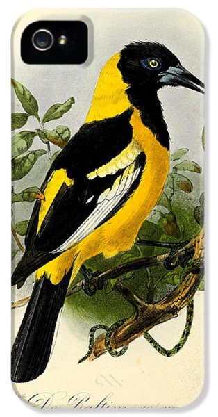 Baltimore Oriole IPhone 5 / 5s Case by J G Keulemans