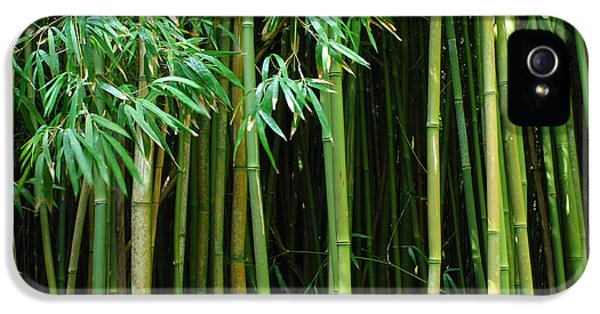 Bob Christopher iPhone 5 Cases - Bamboo Forest Maui iPhone 5 Case by Bob Christopher