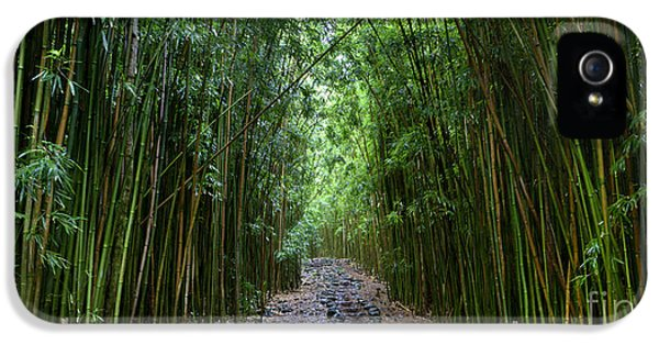 Bamboo Forest Trail Hana Maui IPhone 5 / 5s Case by Dustin K Ryan