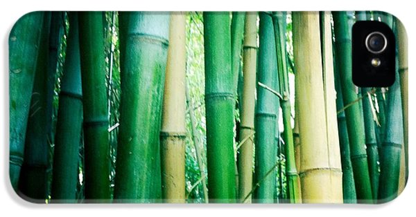 Bamboo IPhone 5 / 5s Case by Sarah Coppola