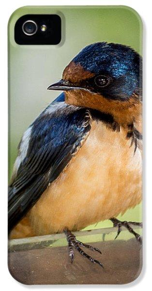 Barn Swallow IPhone 5 / 5s Case by Ernie Echols