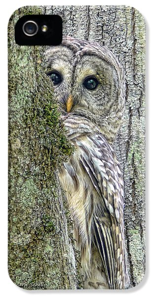 Gray iPhone 5 Cases - Barred Owl Peek a Boo iPhone 5 Case by Jennie Marie Schell