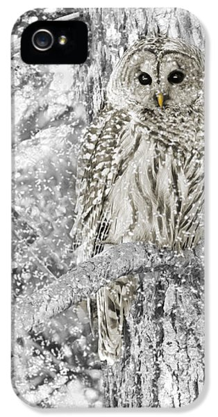Barred Owl Snowy Day In The Forest IPhone 5 / 5s Case by Jennie Marie Schell