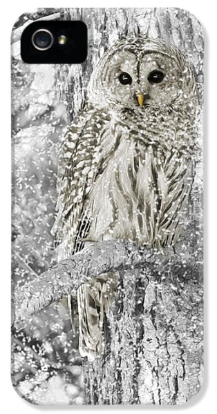 Gray iPhone 5 Cases - Barred Owl Snowy Day in the Forest iPhone 5 Case by Jennie Marie Schell