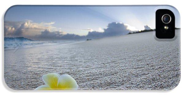 Plumerias iPhone 5 Cases - Beach Plumeria iPhone 5 Case by Sean Davey