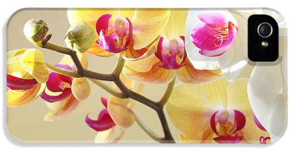 Beautiful Orchids Floral Art Prints Orchid Flowers IPhone 5 / 5s Case by Baslee Troutman