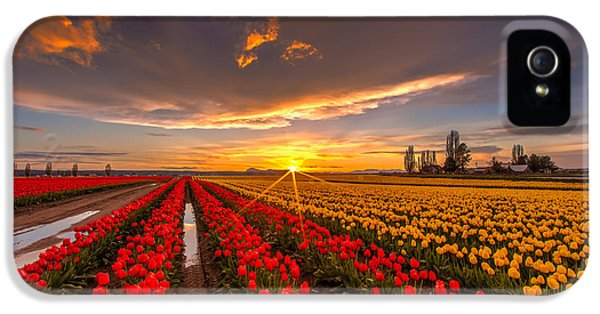 Tulips iPhone 5 Cases - Beautiful Tulip Field Sunset iPhone 5 Case by Mike Reid