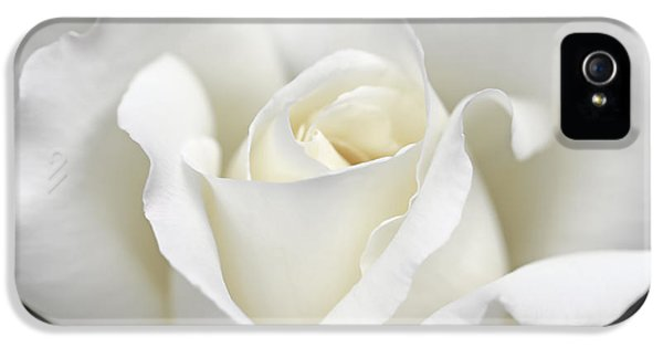 Ivory Rose iPhone 5 Cases - Beauty of the White Rose Flower iPhone 5 Case by Jennie Marie Schell