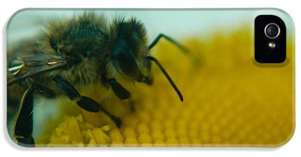 Bee Close Up IPhone 5 / 5s Case by Rhonda Barrett