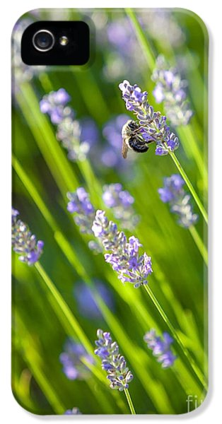 Bee iPhone 5 Cases - Bee on a Lavender Flower iPhone 5 Case by Diane Diederich