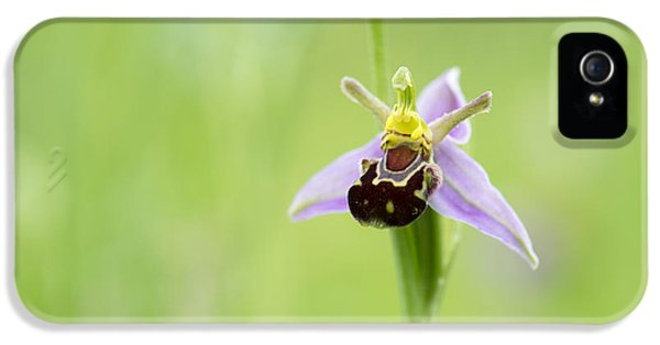 Bee iPhone 5 Cases - Bee Orchid iPhone 5 Case by Tim Gainey