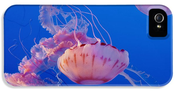 Polyp iPhone 5 Cases - Below The Surface 3 iPhone 5 Case by Jack Zulli