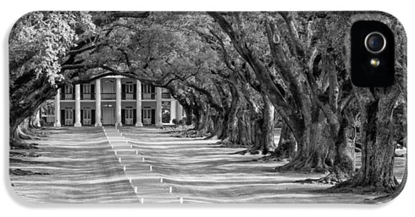 Historic Oak iPhone 5 Cases - Beneath Live Oaks bw iPhone 5 Case by Steve Harrington