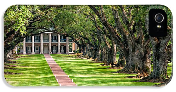 Historic Oak iPhone 5 Cases - Beneath Live Oaks iPhone 5 Case by Steve Harrington