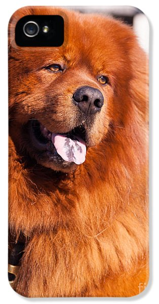 Bff iPhone 5 Cases - Big Fluffy Dog 5D29704 iPhone 5 Case by Wingsdomain Art and Photography
