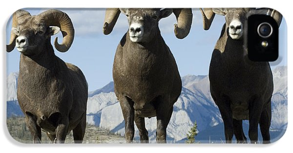 Bob Christopher iPhone 5 Cases - Big Horn Sheep iPhone 5 Case by Bob Christopher