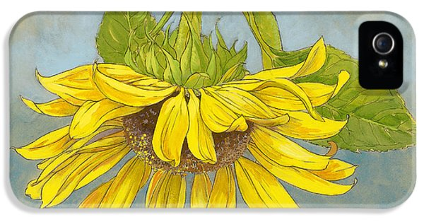Big Sunflower IPhone 5 / 5s Case by Tracie Thompson