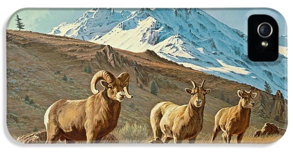 Ewe iPhone 5 Cases - Bighorn Below Electric Peak iPhone 5 Case by Paul Krapf