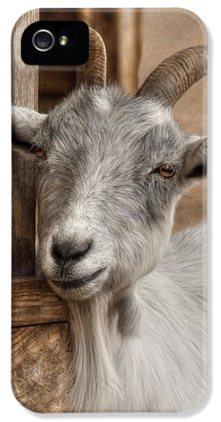 Billy Goat IPhone 5 / 5s Case by Lori Deiter