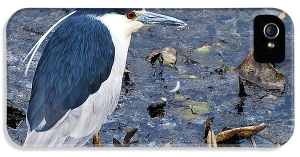 Bird Watcher iPhone 5 Cases - Bird - Black Crowned Night Heron iPhone 5 Case by Paul Ward
