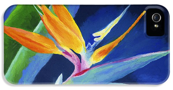 Bold iPhone 5 Cases - Bird of Paradise iPhone 5 Case by Stephen Anderson