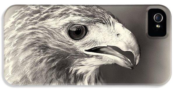 Hawk iPhone 5 Cases - Bird Of Prey iPhone 5 Case by Dan Sproul
