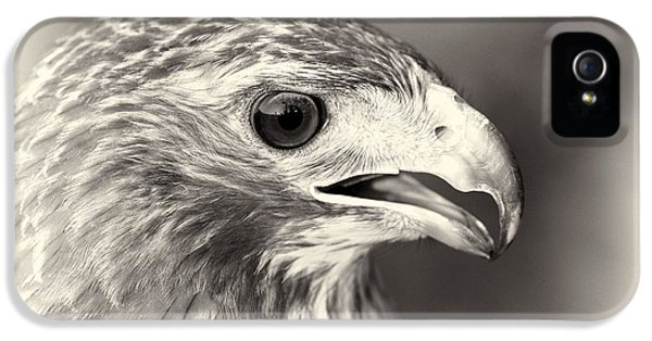 Bird Of Prey IPhone 5 / 5s Case by Dan Sproul