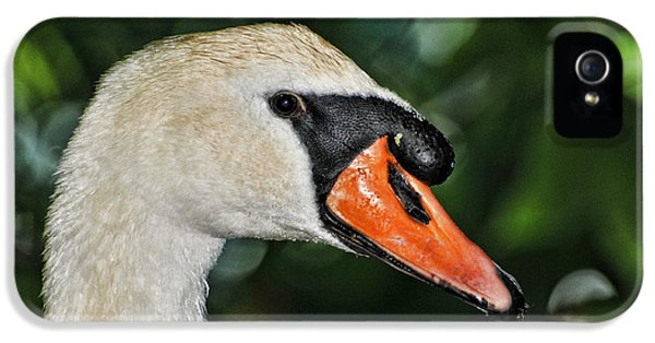 Bird Watcher iPhone 5 Cases - Bird - Swan - Mute Swan Close up iPhone 5 Case by Paul Ward