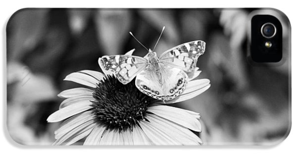Cone Flowers And Butterflies iPhone 5 Cases - Black and White butterfly iPhone 5 Case by Debbie Sikes