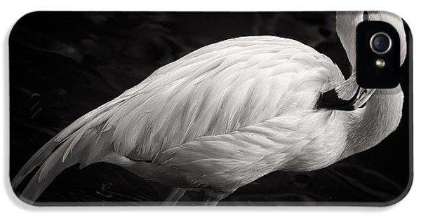 Black And White Flamingo IPhone 5 / 5s Case by Adam Romanowicz