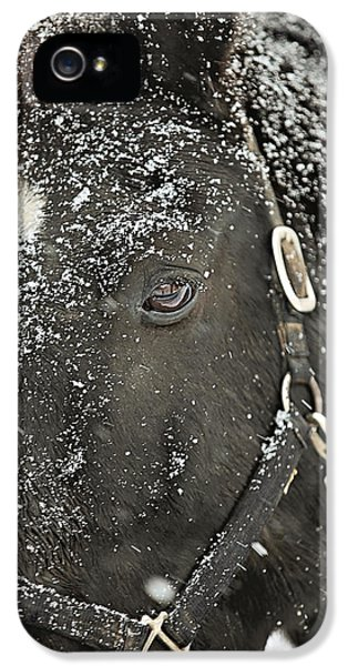 Horse iPhone 5 Cases - Black Beauty in a Blizzard iPhone 5 Case by Carrie Ann Grippo-Pike
