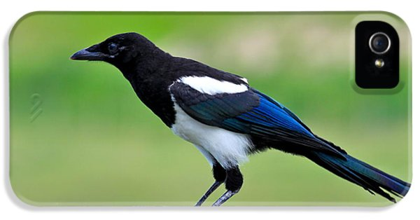Black Billed Magpie IPhone 5 / 5s Case by Karon Melillo DeVega