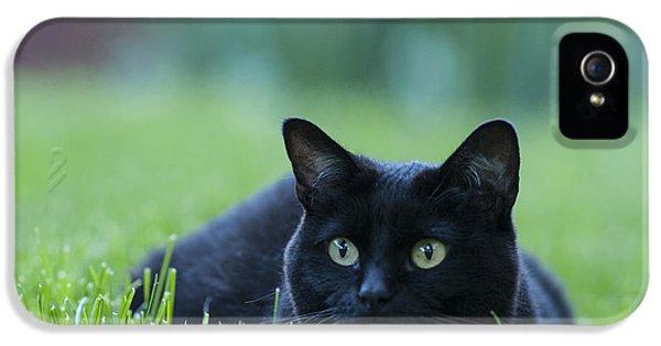 Black Cat IPhone 5 / 5s Case by Juli Scalzi