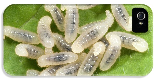 Black Garden Ant Larvae IPhone 5 / 5s Case by Nigel Downer