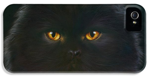 Portraits iPhone 5 Cases - Black Persian iPhone 5 Case by Andrew Farley