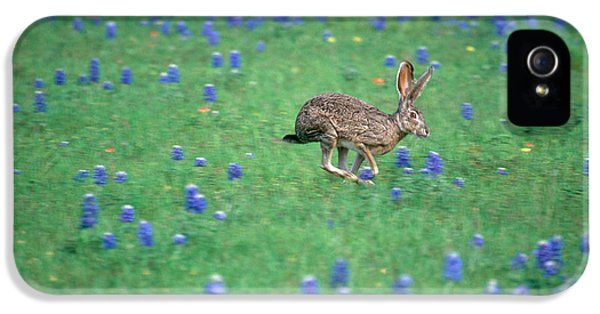 Jackrabbit iPhone 5 Cases - Black-tailed Jackrabbit iPhone 5 Case by Alan and Sandy Carey