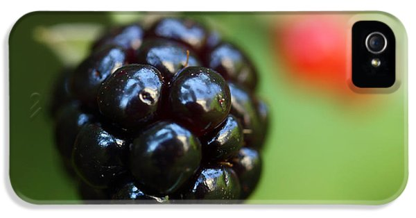 Wild iPhone 5 Cases - Blackberry On The Vine iPhone 5 Case by Michael Eingle