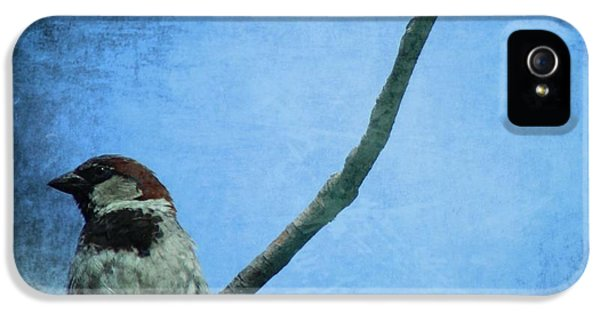 Sparrow On Blue IPhone 5 / 5s Case by Dan Sproul