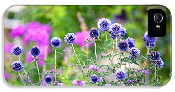 Echinops iPhone 5 Cases - Blue Dance of the Plants iPhone 5 Case by Jenny Rainbow