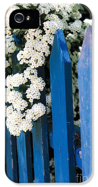 Charming iPhone 5 Cases - Blue garden fence with white flowers iPhone 5 Case by Elena Elisseeva