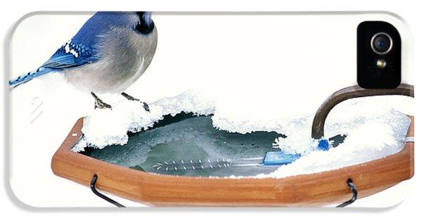 Blue Jay At Heated Birdbath IPhone 5 / 5s Case by Steve and Dave Maslowski