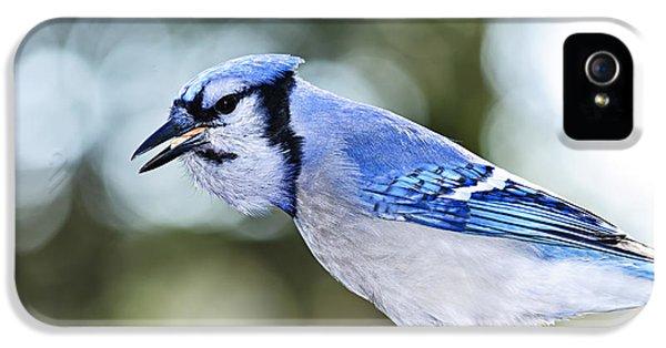 Blue Jay Bird IPhone 5 / 5s Case by Elena Elisseeva