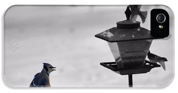 Bird Watcher iPhone 5 Cases - Blue Jay In Flight iPhone 5 Case by Dan Sproul