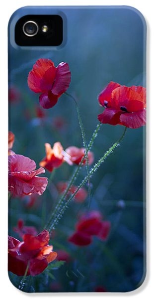 Poppy iPhone 5 Cases - Blue Summer III iPhone 5 Case by Magda  Bognar