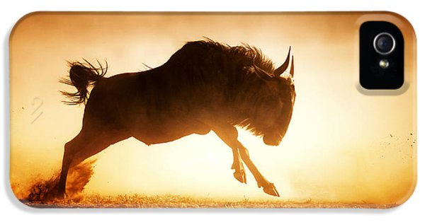 Backlight iPhone 5 Cases - Blue wildebeest running in dust iPhone 5 Case by Johan Swanepoel