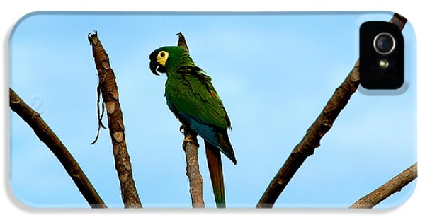Blue-winged Macaw, Brazil IPhone 5 / 5s Case by Gregory G. Dimijian, M.D.