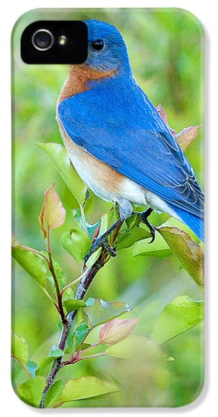 Blue Bird iPhone 5 Cases - Bluebird Joy iPhone 5 Case by William Jobes