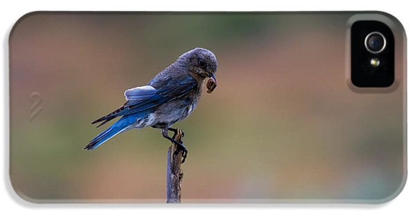 Bluebird Lunch IPhone 5 / 5s Case by Mike  Dawson